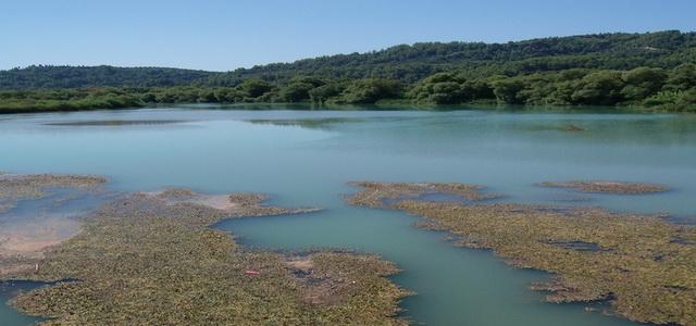 Alfeios River